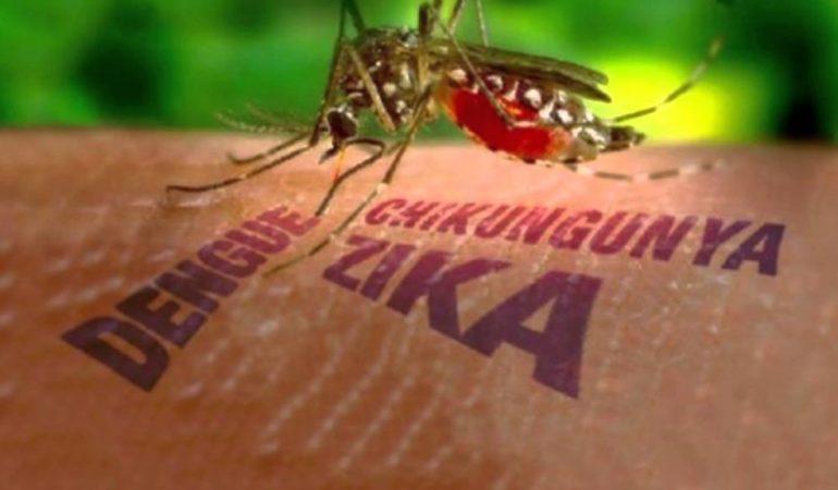 Cómo prevenir infecciones virales trasmitidas por mosquitos